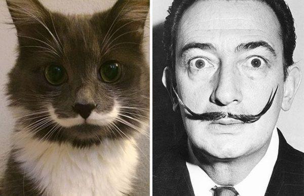 gatos-parecidos04
