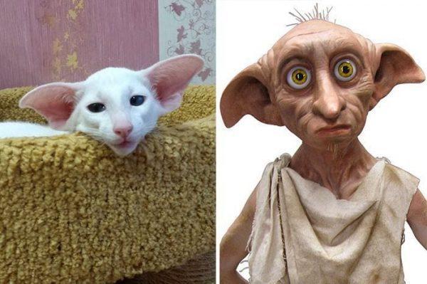 gatos-parecidos07
