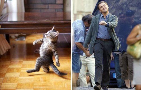 gatos-parecidos10
