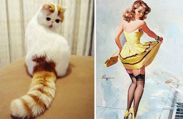 gatos-parecidos13