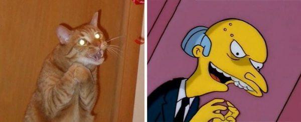 gatos-parecidos17