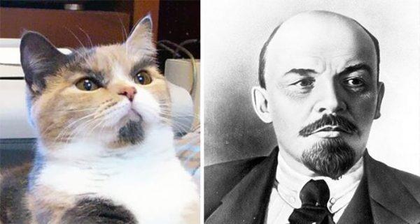 gatos-parecidos19