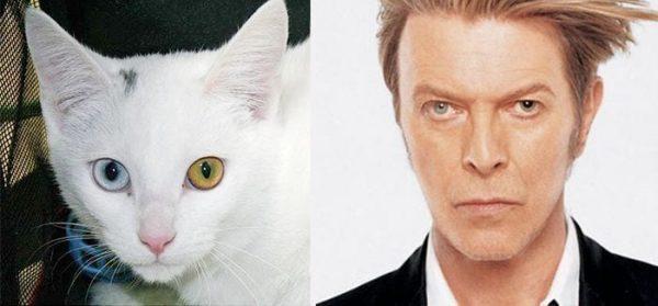 gatos-parecidos21