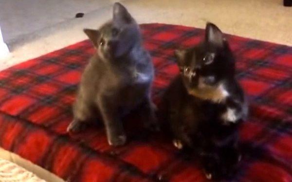 gatos raperos