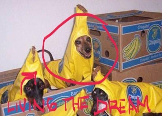 perros-gozando01