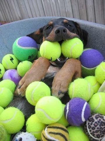 perros-gozando15