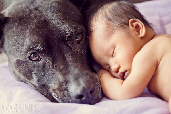 perros_grandes_ninos10