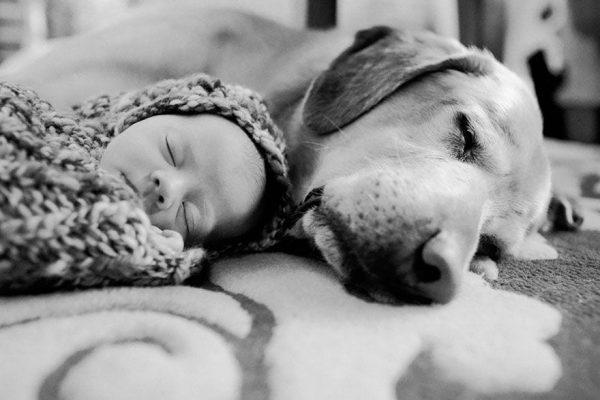 perros_grandes_ninos12