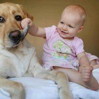perros grandes ninos13