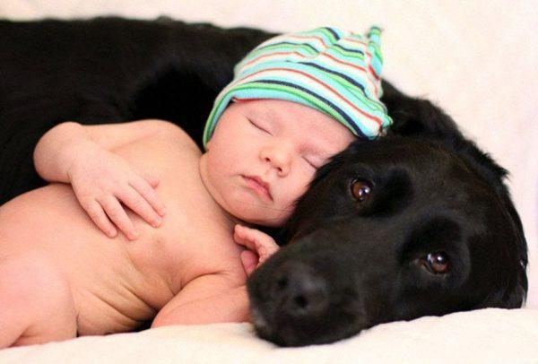 perros_grandes_ninos14