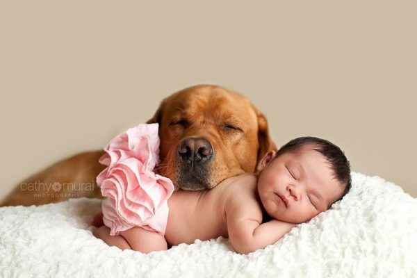 perros_grandes_ninos15