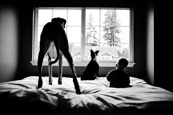 perros_grandes_ninos16
