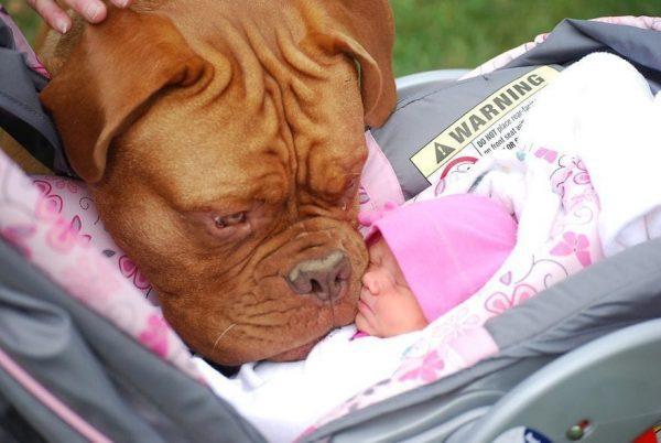 perros_grandes_ninos18