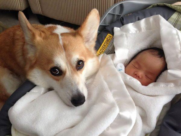 perros_grandes_ninos19