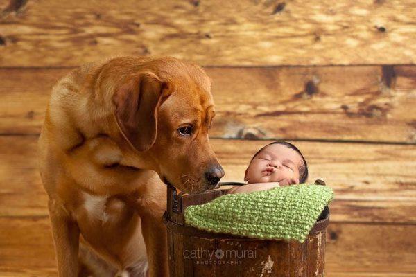 perros_grandes_ninos21