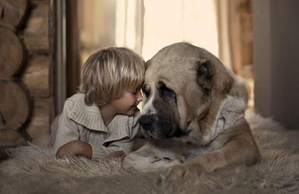 perros_grandes_ninos4