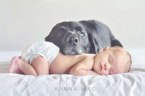 perros_grandes_ninos5