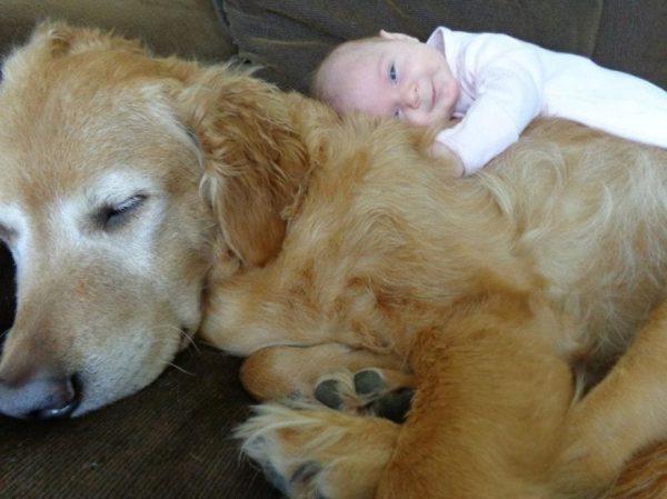 perros_grandes_ninos7