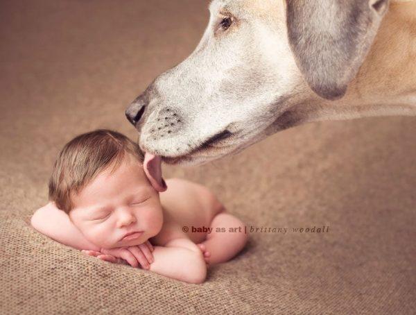 perros_grandes_ninos8