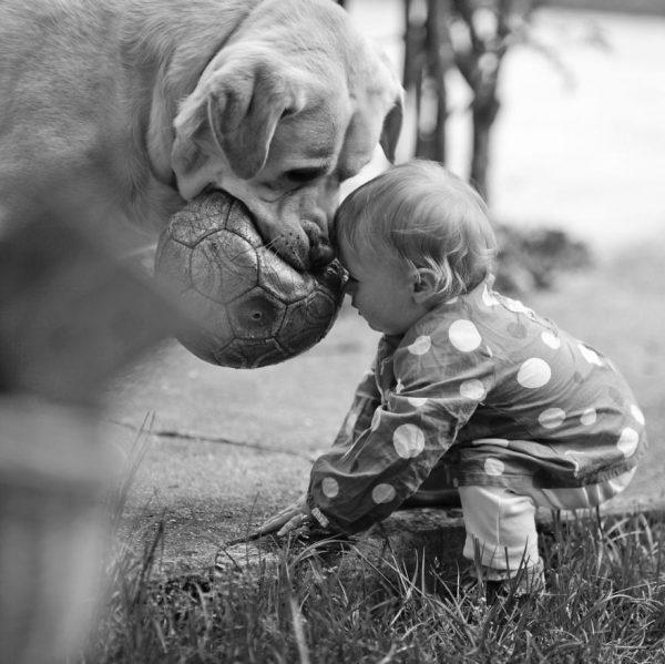 perros_grandes_ninos9