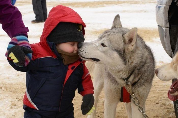 0019 agradecimiento perros 19