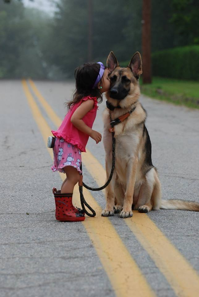 0020-agradecimiento_perros_20