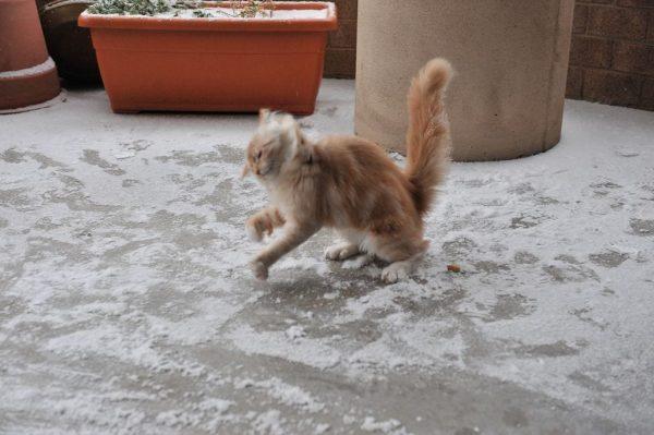 animales-en-la-nieve-11
