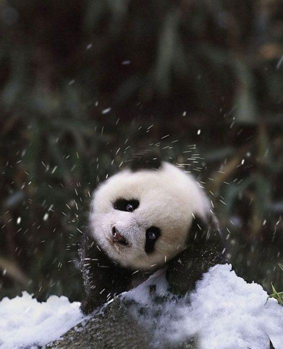 animales-en-la-nieve-13