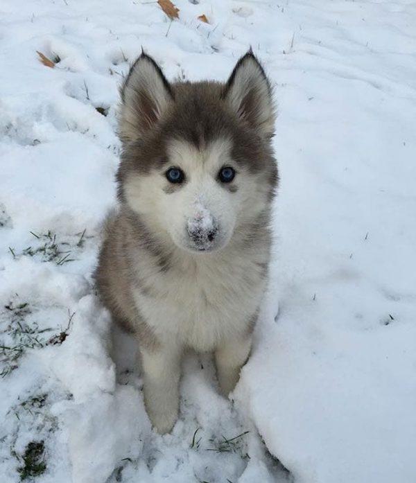 animales-en-la-nieve-14