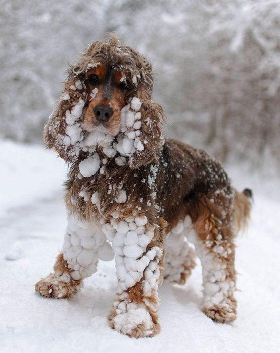 animales-en-la-nieve-17