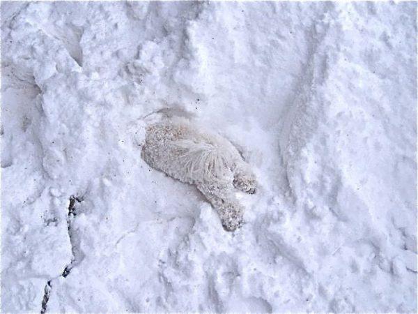 animales-en-la-nieve-18