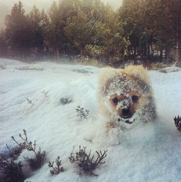 animales-en-la-nieve-19