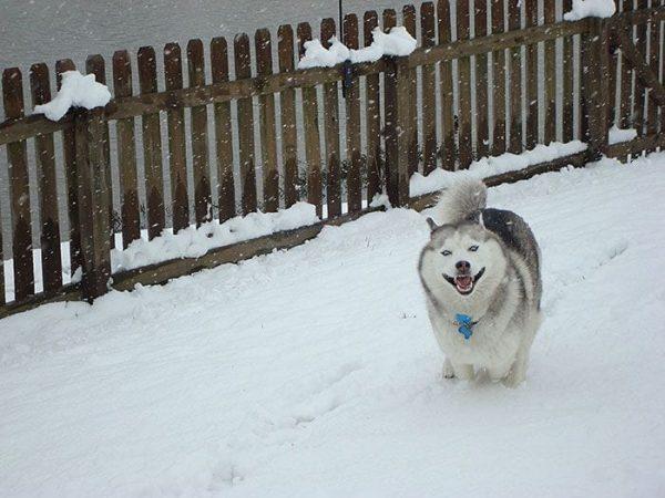 animales-en-la-nieve-21