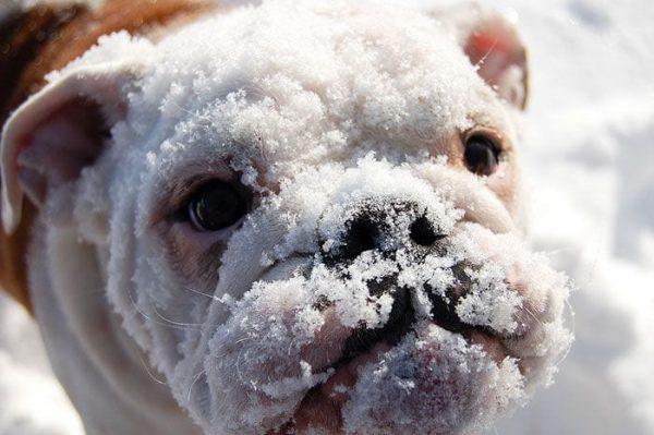 animales-en-la-nieve-22