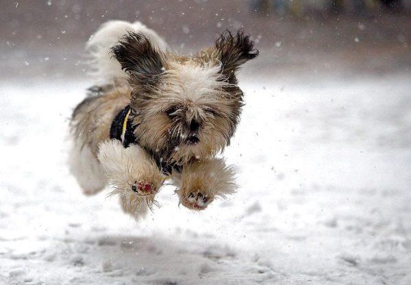 animales en la nieve 23
