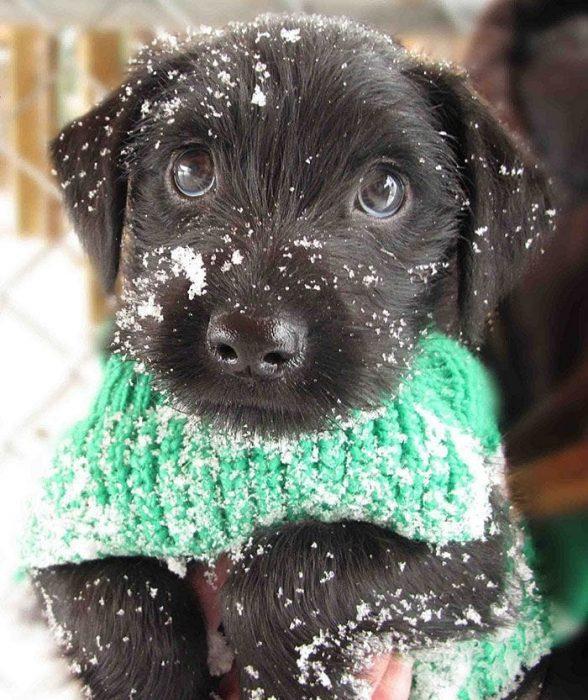 animales-en-la-nieve-24