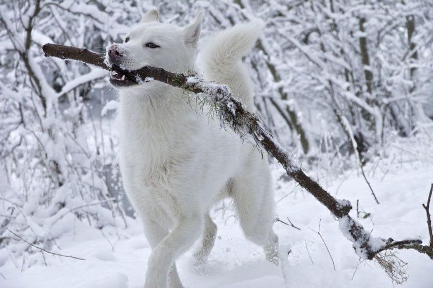 animales-en-la-nieve-25