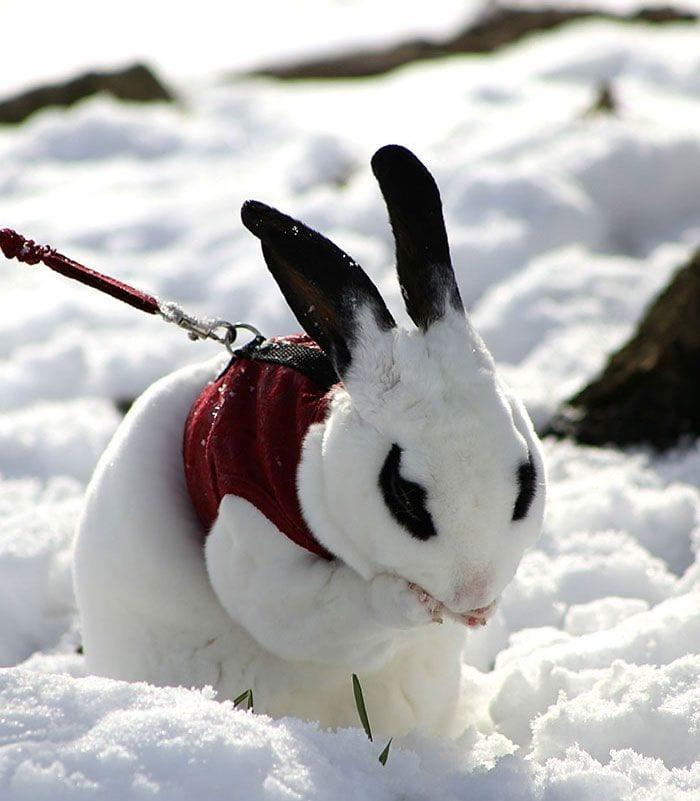 animales-en-la-nieve-27