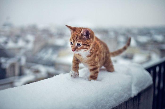 animales-en-la-nieve-29