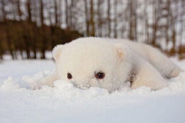 animales-en-la-nieve-3