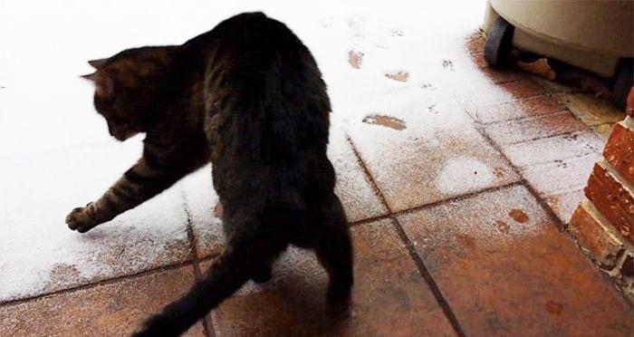 animales-en-la-nieve-30