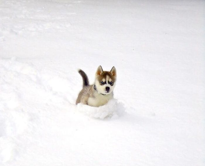 animales-en-la-nieve-31