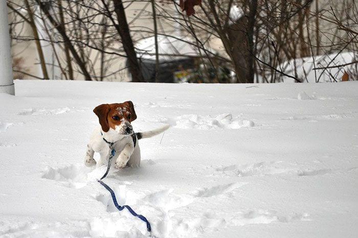 animales-en-la-nieve-33
