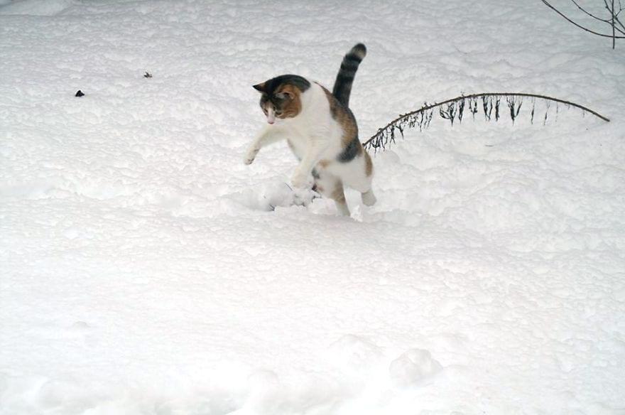 animales-en-la-nieve-39