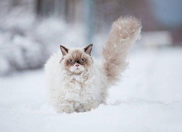 animales-en-la-nieve-4