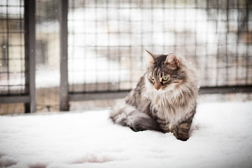 animales-en-la-nieve-40