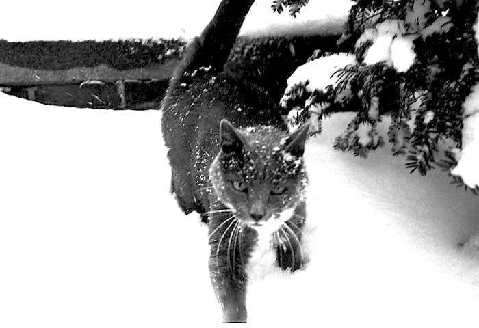 animales-en-la-nieve-47