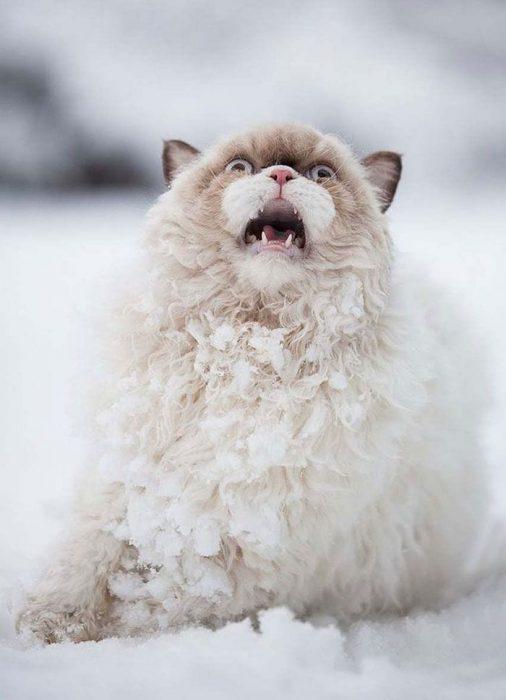 animales-en-la-nieve-6