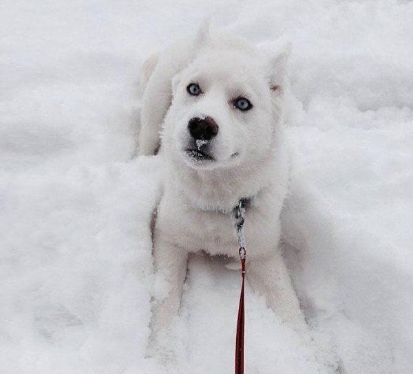 animales-en-la-nieve-7