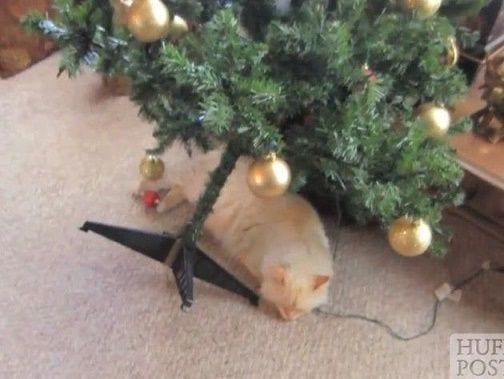 animales-navidad01